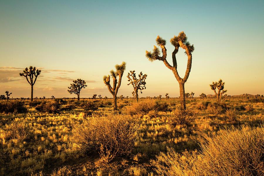 Desert Dawn 6 by Ryan Weddle