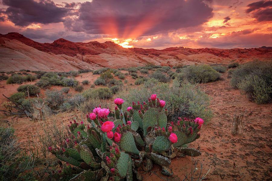 Desert Dusk Rays by Johnny Adolphson