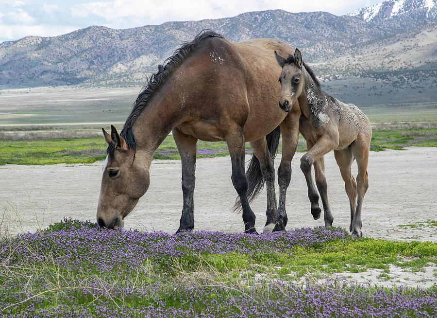 Desert Flowers by Kent Keller