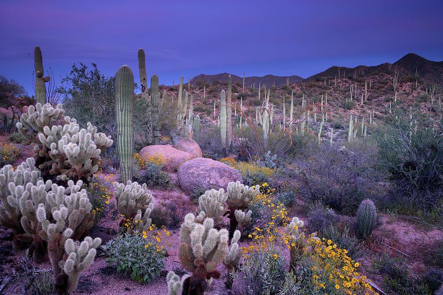 Saguaro Cactus Photograph - Desert Garden by Ericfoltz