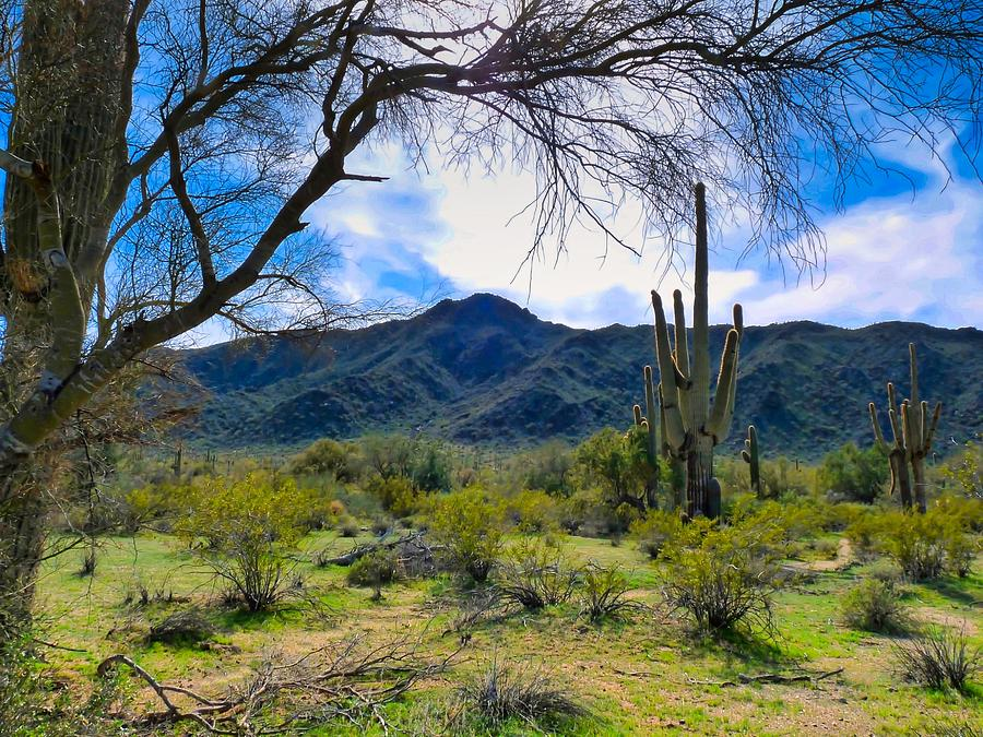 Desert Hiking after Winter Rains by Judy Kennedy