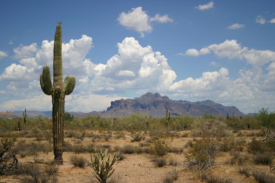 Desert Landscape Photograph by Vlynder