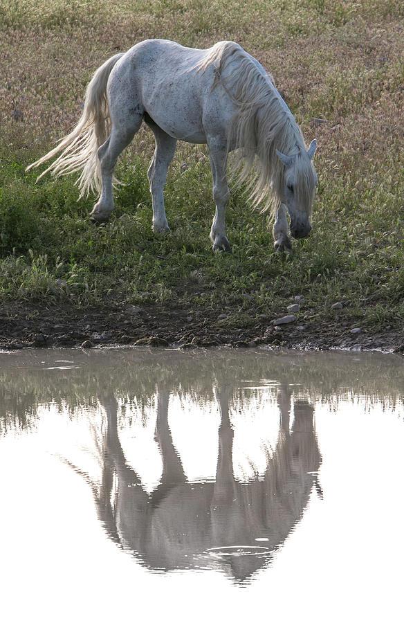 Desert Mirror by Kent Keller