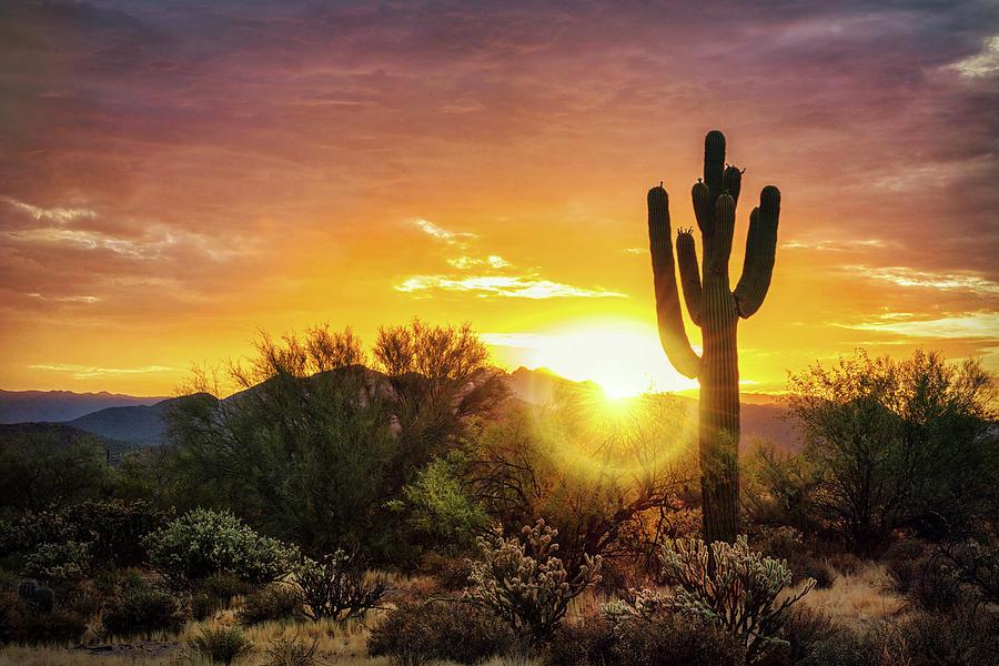 Desert Morning Glory  by Saija Lehtonen