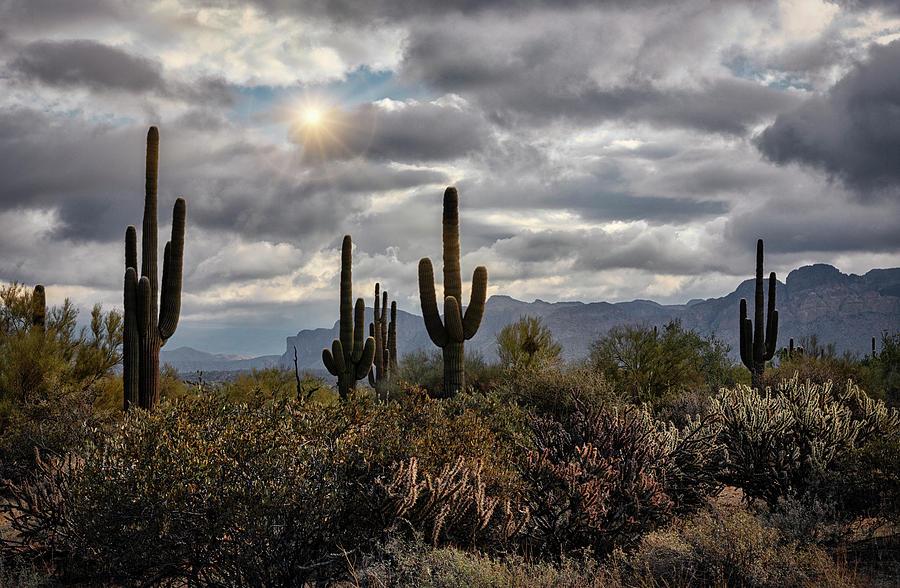 Desert Morning Sunshine  by Saija Lehtonen