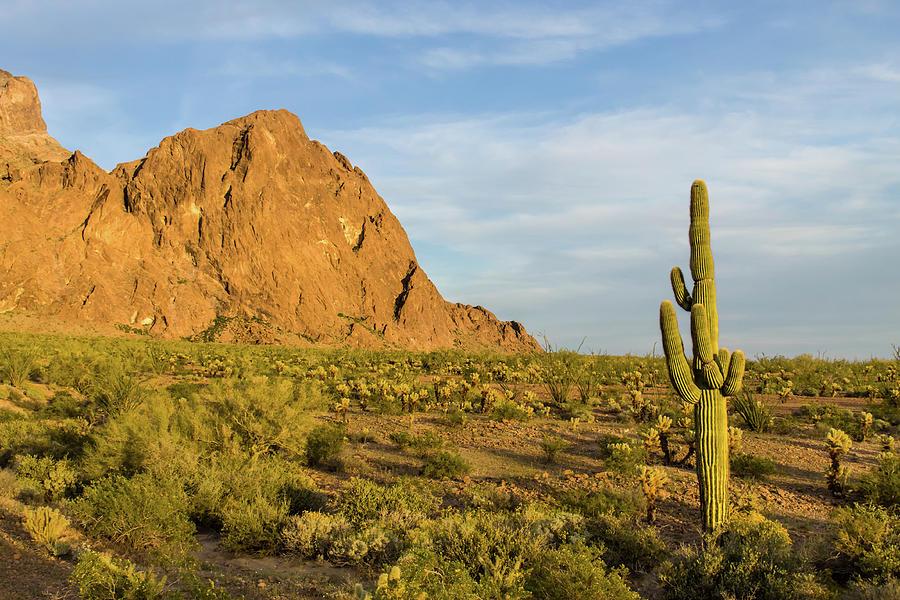 Desert Mountain Cactus Classic Photograph by Photo By Chris Lemmen Www.chrislemmenphotography.ca