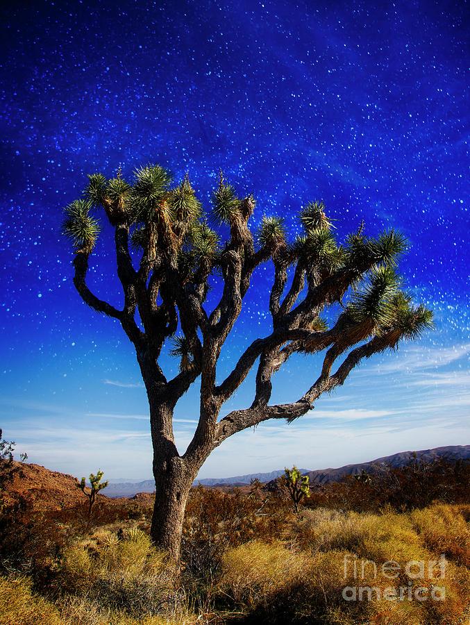 Desert Night Sky by Scott Kemper