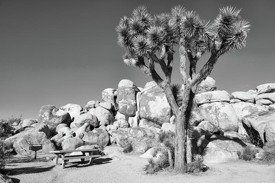 Desert Picnic Spot - Joshua Tree National Park - California Photograph
