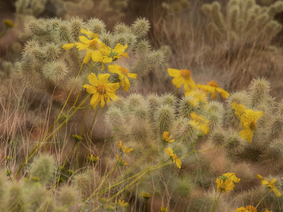 Desert Spring Whispers by Sue Cullumber