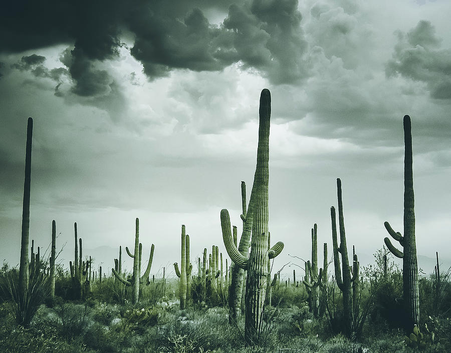 Desert Storm in Arizona by Kevin Schwalbe