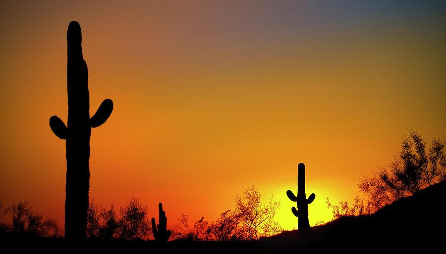 Desert Sunset Photograph - Desert Sunset by Jonathan Ross