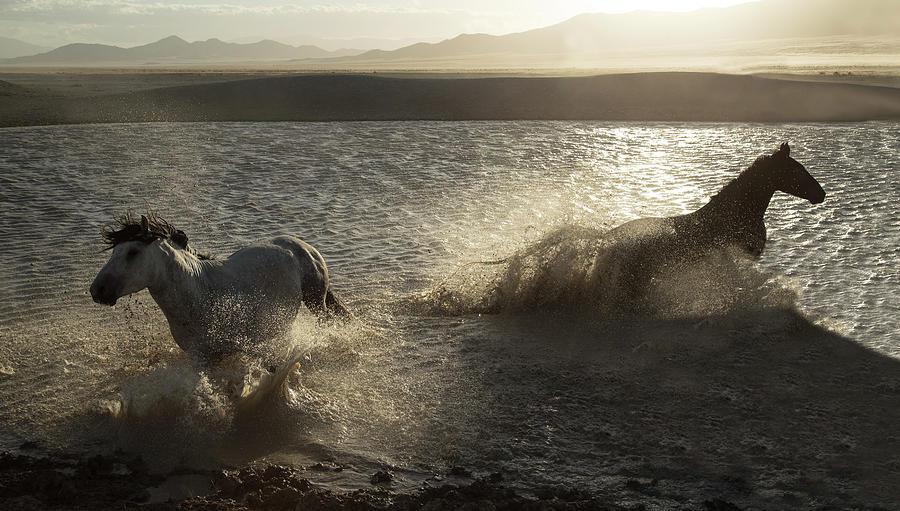 Desert Water Stallions by Kent Keller