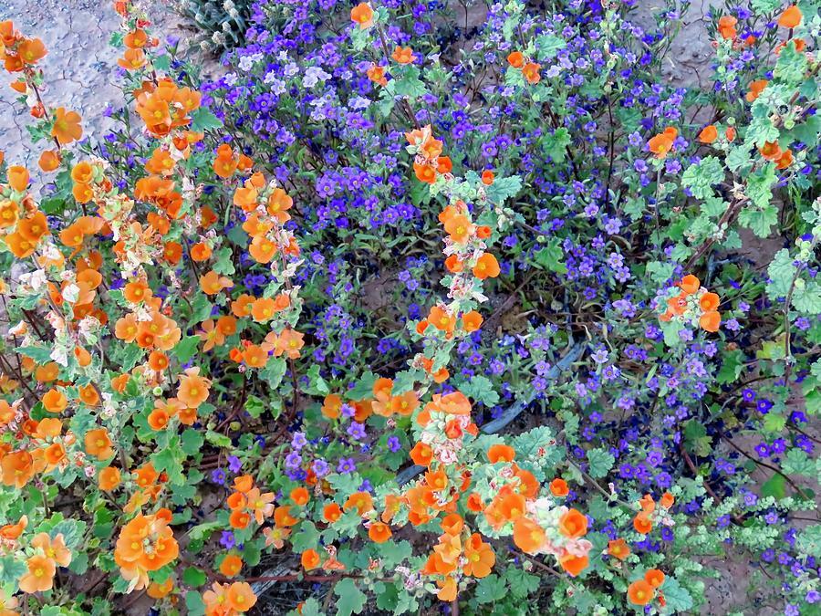 Desert Wildflowers 2 by Judy Kennedy