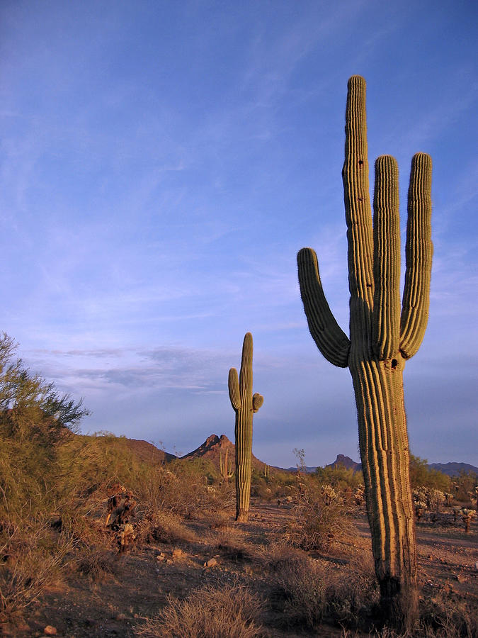 Desertdream Photograph by Capsule