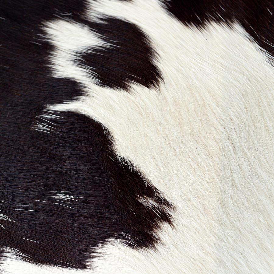 Designer Fur Photograph by Digiclicks