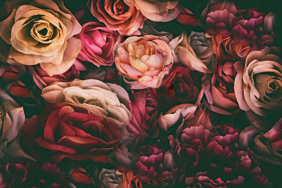 Roses Photograph - Desire by Jessica Jenney
