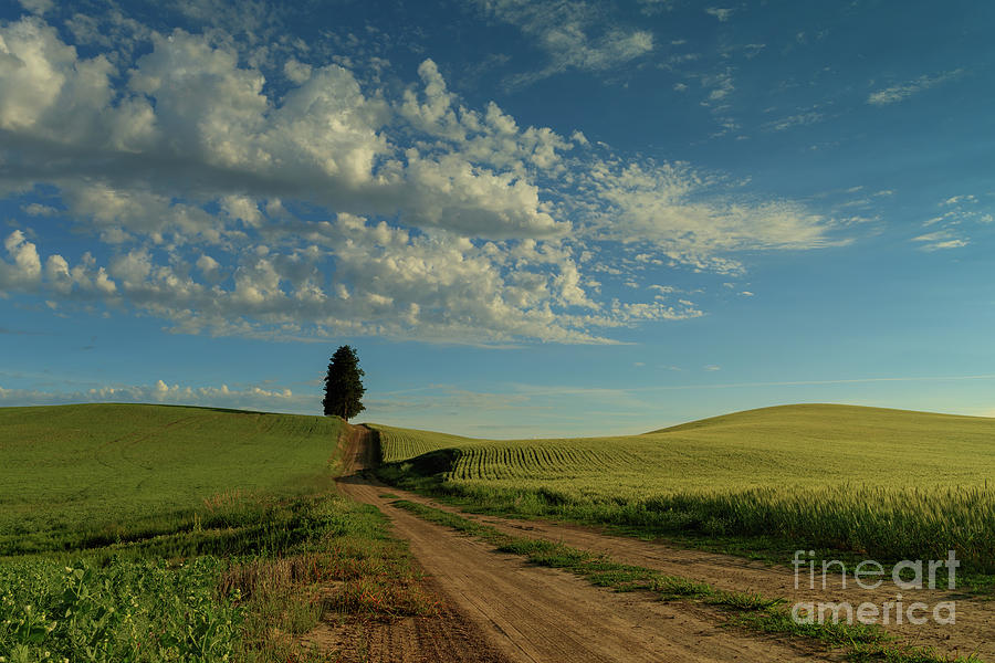 Destination - Wide Open Spaces by Beve Brown-Clark Photography
