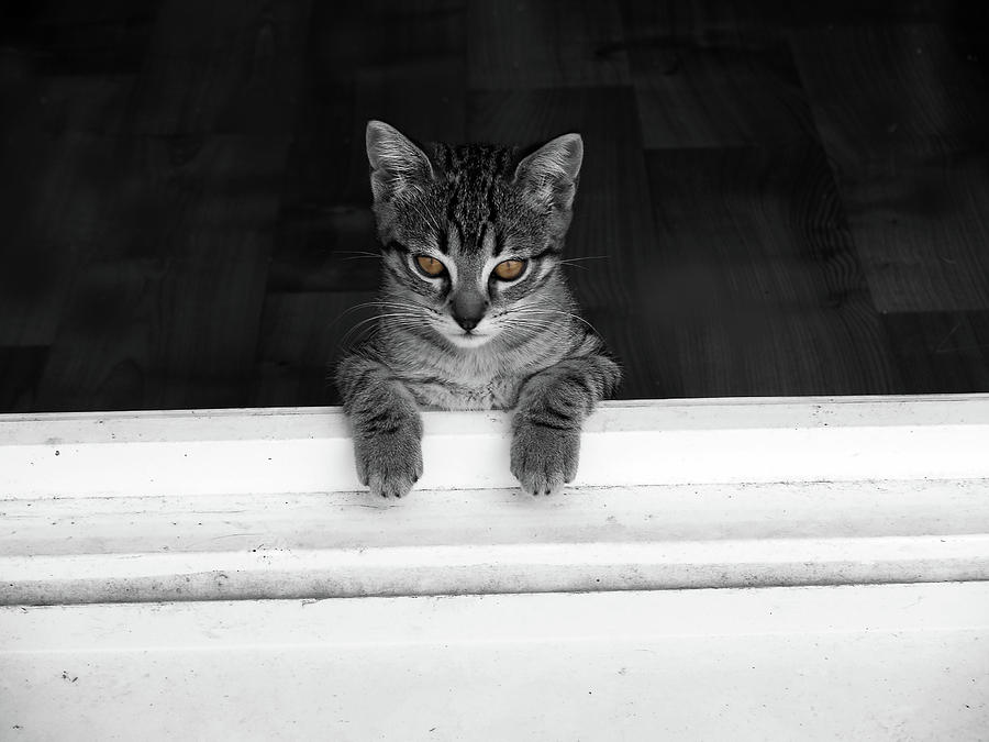 Cat Photograph - Destinee Is Looking Out by Christine AVIGNON