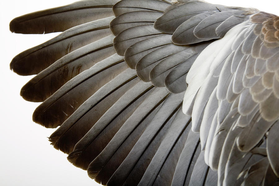 Detail Of A Wing Photograph by Grafissimo