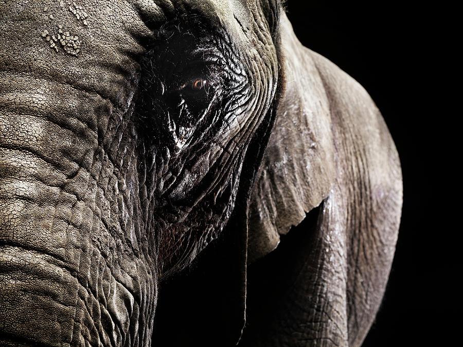 Detail Of Elephant - Eye In Focus Photograph by Henrik Sorensen