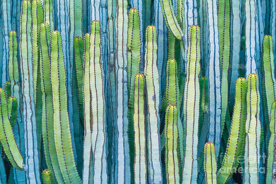 Spain Photograph - Detail View Of The Cardon Cactus In by Ed Reardon