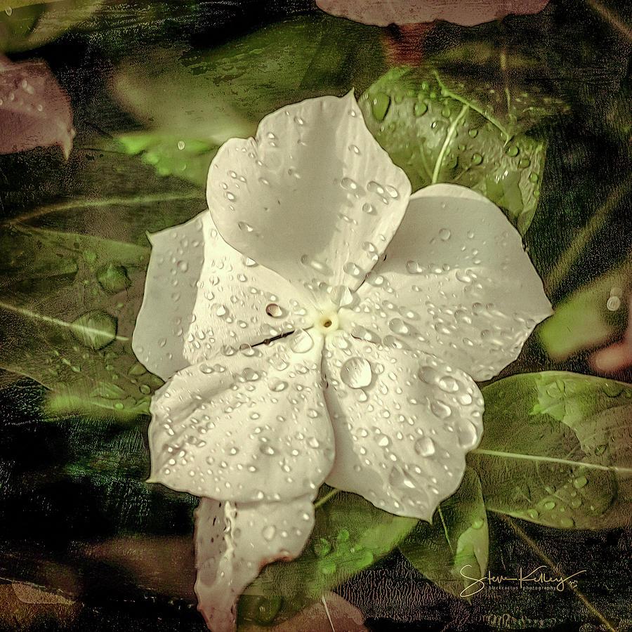 Dew Flower by Steve Kelley