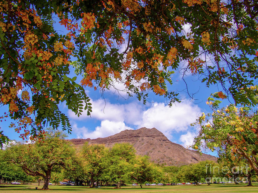 Diamond Head Crater at Queen Kapiolani Park - Hawaii Tropical Flowers by D Davila