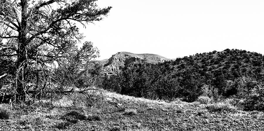 Diamondback Gulch - Sedona Arizona by David Patterson