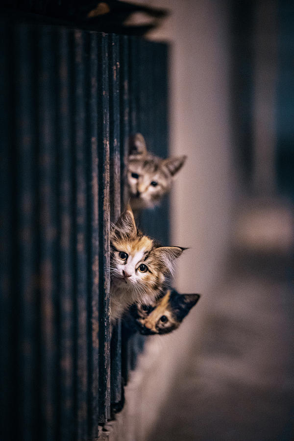 Cat Photograph - Did Some One Meow..?! by Arash Shakoorzadeh Boloori