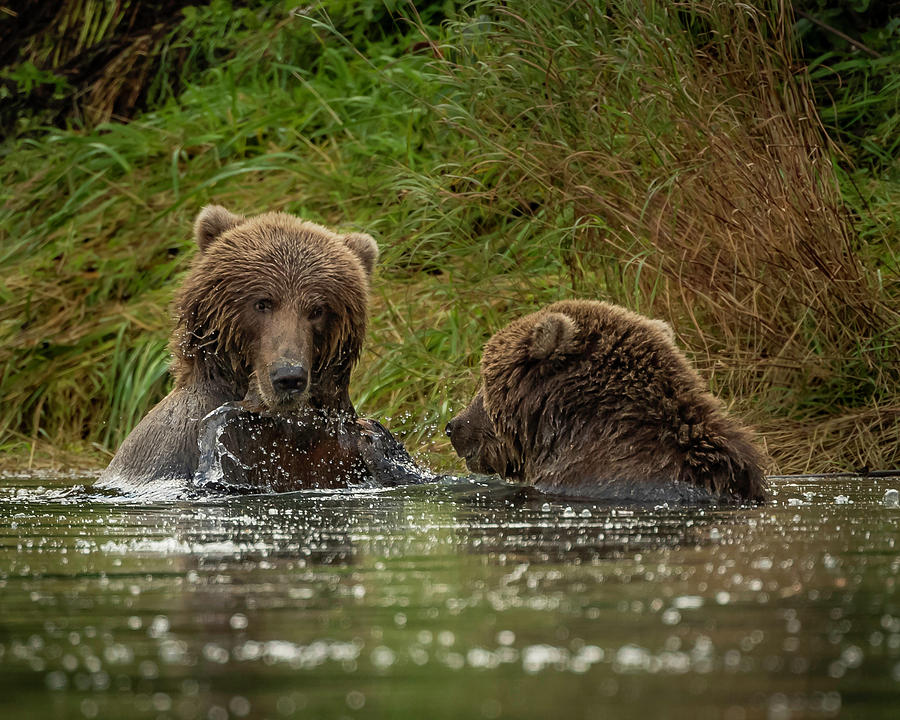 Did You Just Splash Me? by Laura Hedien