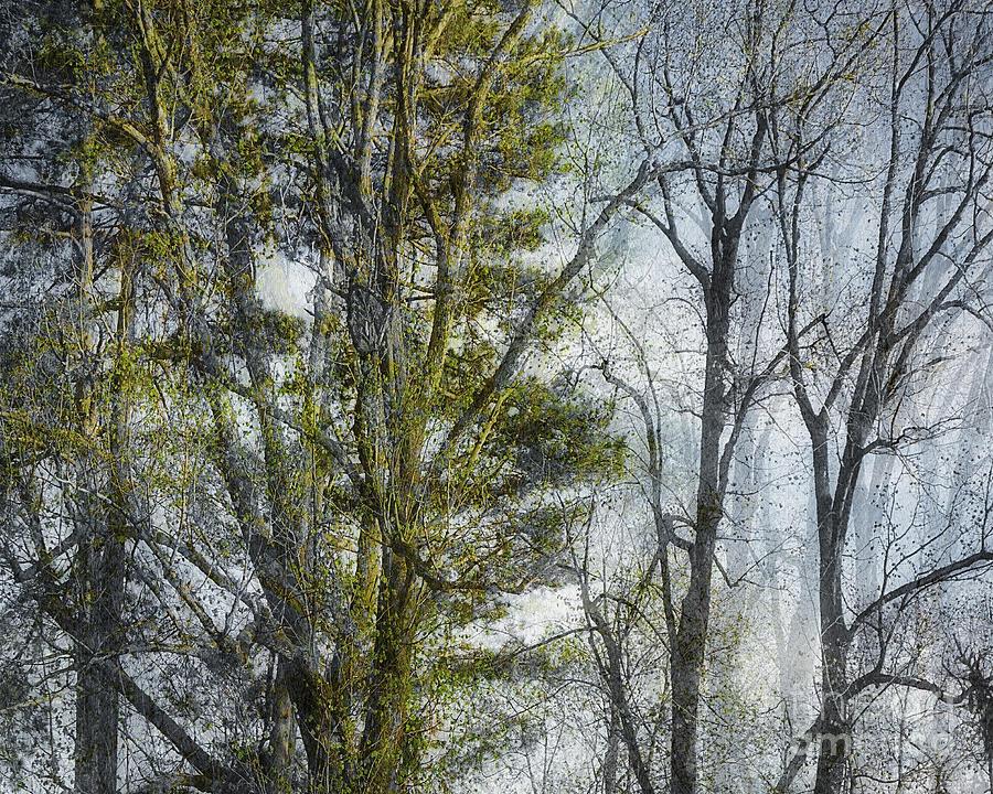 Die Magie des Waldes by Edmund Nagele