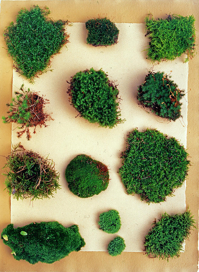 Different Kinds Of Mosses By Richard Felber