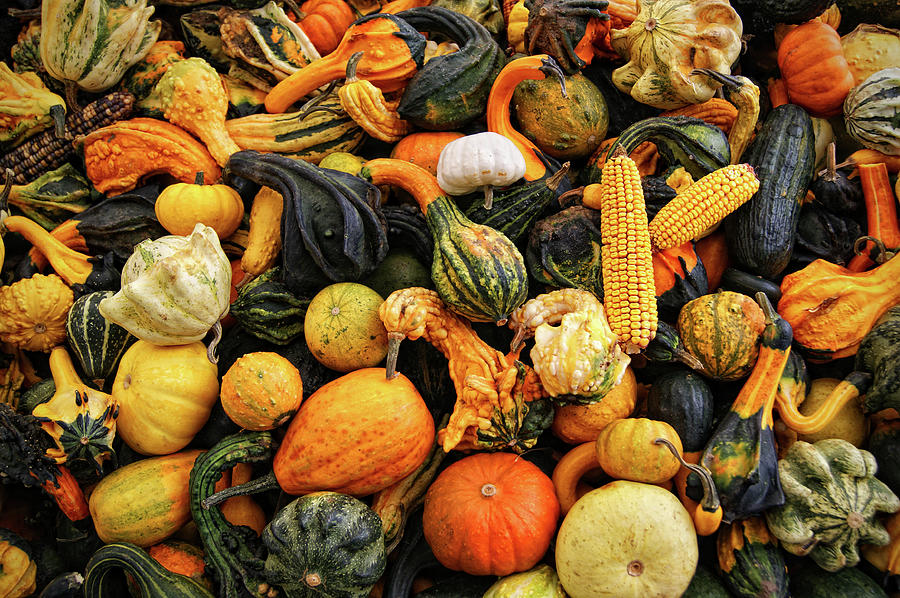 Different Types Of Fall Squash Photograph by Www.infinitahighway.com.br