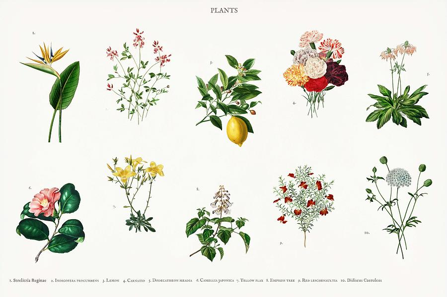 Different Types Of Plants Illustrated By Charles Dessalines D