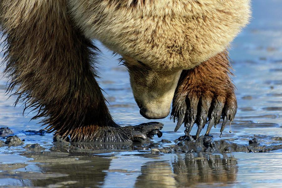 Alaska Photograph - Digging by Chad Dutson