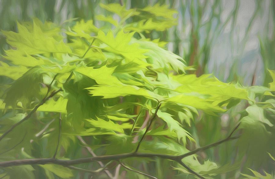 Botanical Photograph - Digital Art Oak Leafs Along Pond Of Reeds by Anthony Paladino