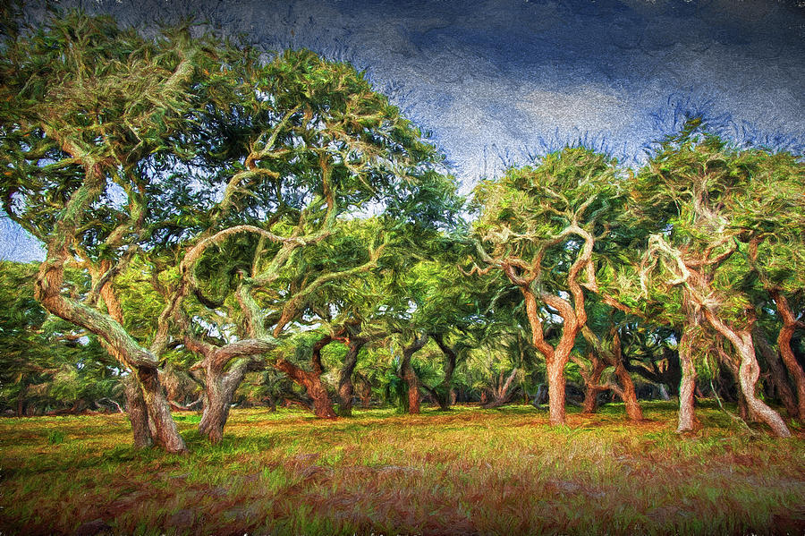 Digital Photographic Painting of a Grove of Trees by Randall Nyhof