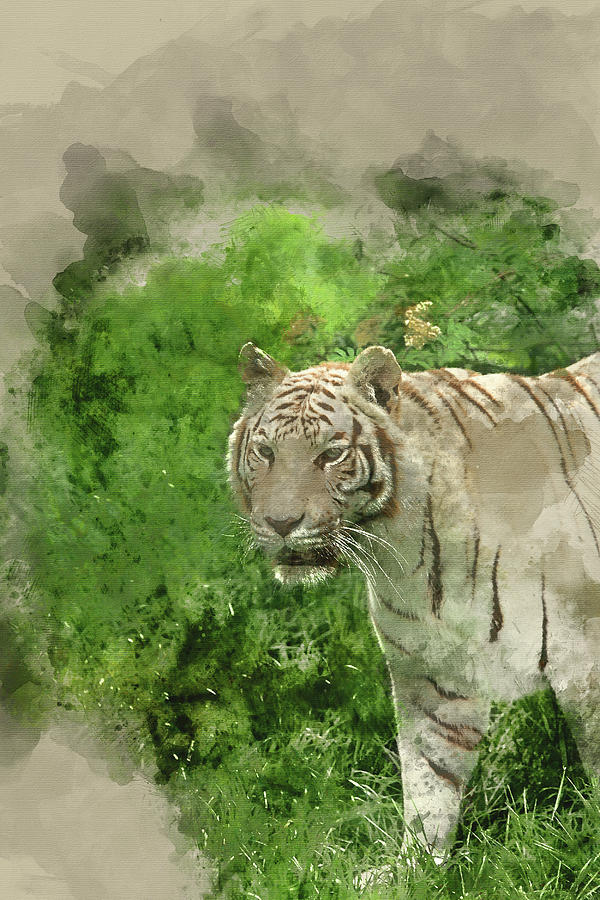 Cat Photograph - Digital Watercolor Painting Of Beautiful Portrait Image Of Hybri by Matthew Gibson