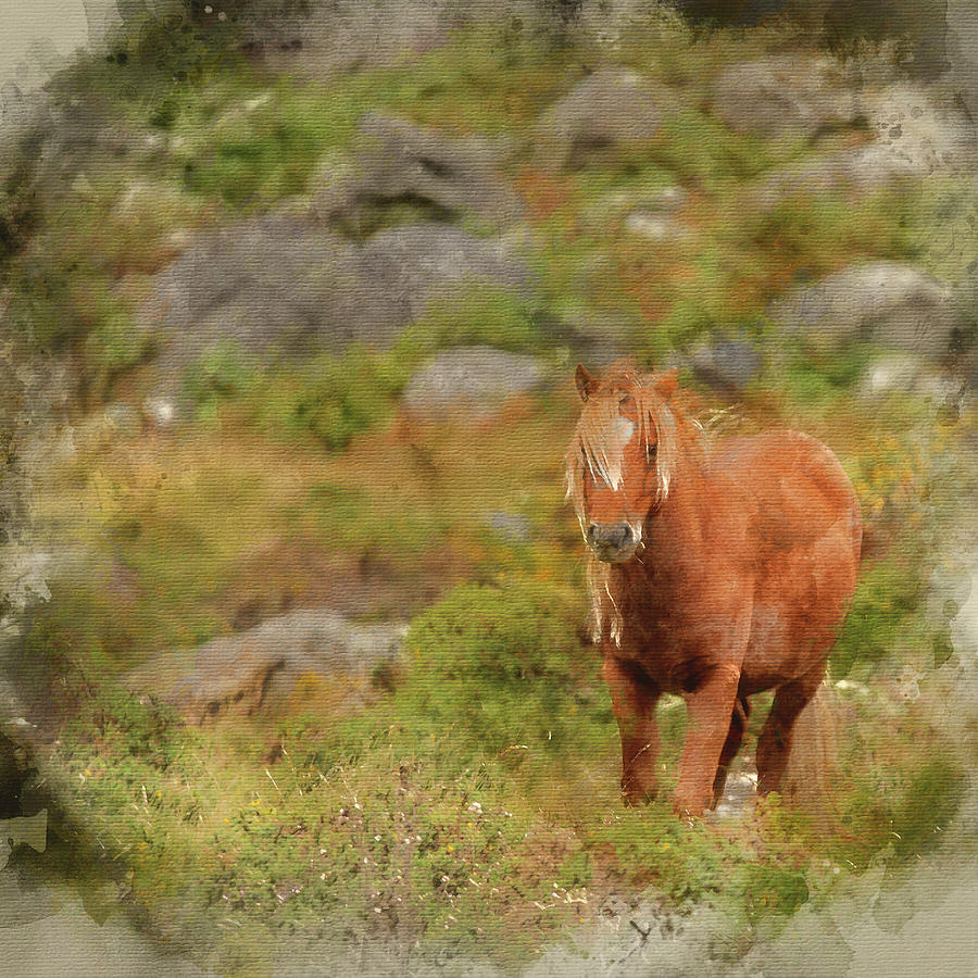 Landscape Photograph - Digital Watercolor Painting Of Stunning Image Of Wild Pony In Sn by Matthew Gibson