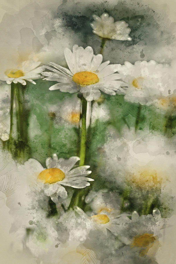 Flower Photograph - Digital Watercolor Painting Of Wild Daisy Flowers In Wildflower  by Matthew Gibson