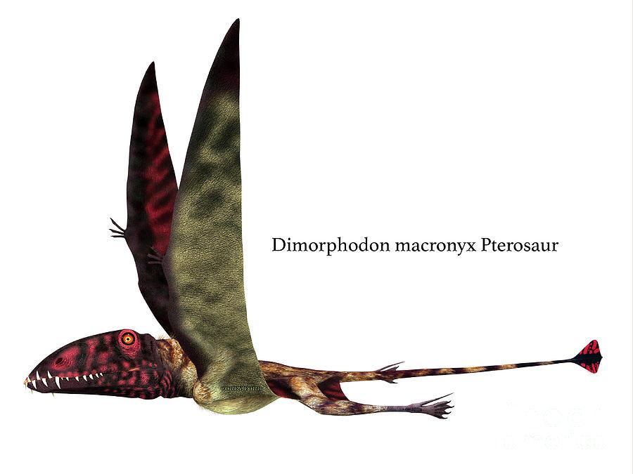 Dimorphodon Reptile Side Profile With Font Digital Art