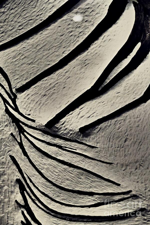 Dinosaur Bone Abstract 2 Photograph