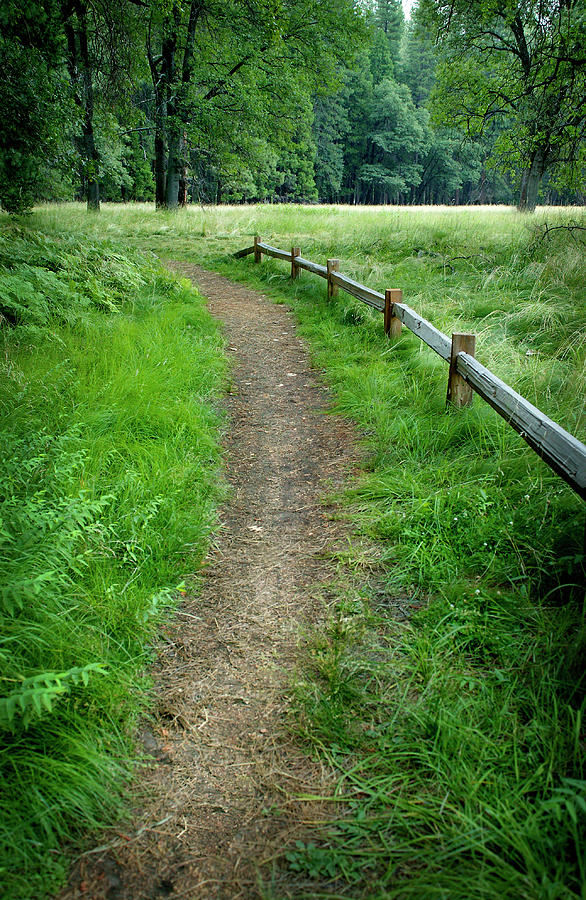 Dirt Path In Woods Photograph by Dny59