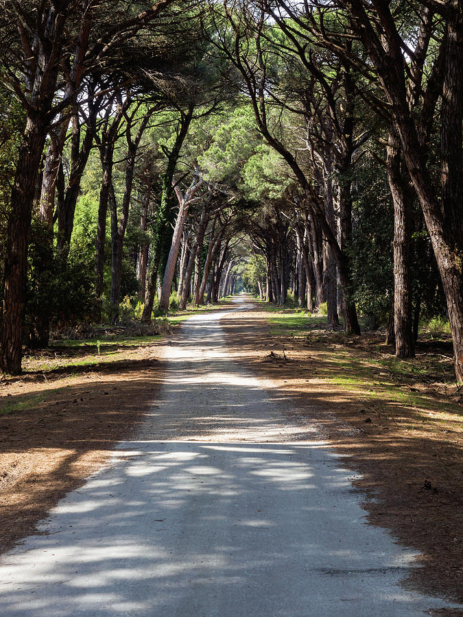 Dirt pathway in a Mediterranean pine forest by Giovanni Bertagna