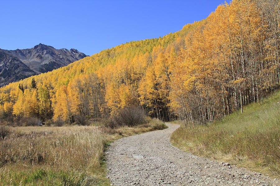 Dirt Road In The Elk Mountains, Colorado Photograph by John Kieffer
