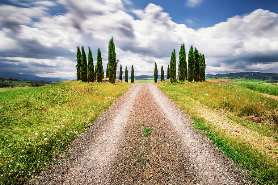 Cypress Trees Photograph - Heavens gate by Andrei Dima