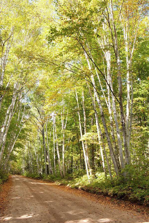 Dirt Road Lined With Trees In Autumn Photograph by Susan Dykstra / Design Pics