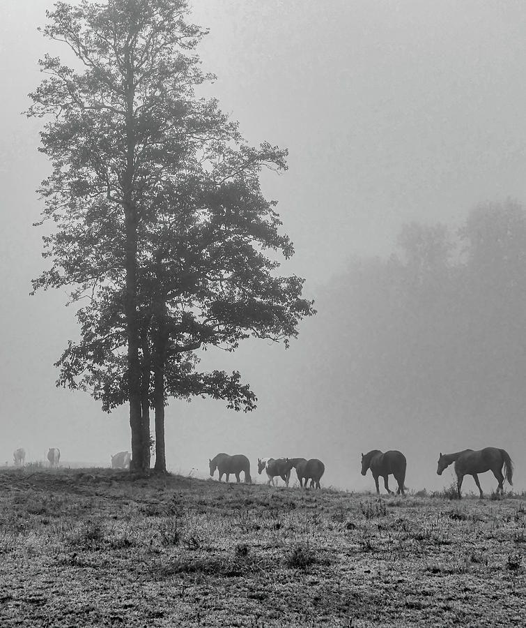 Disappearing, Black and White Vertical by Marcy Wielfaert