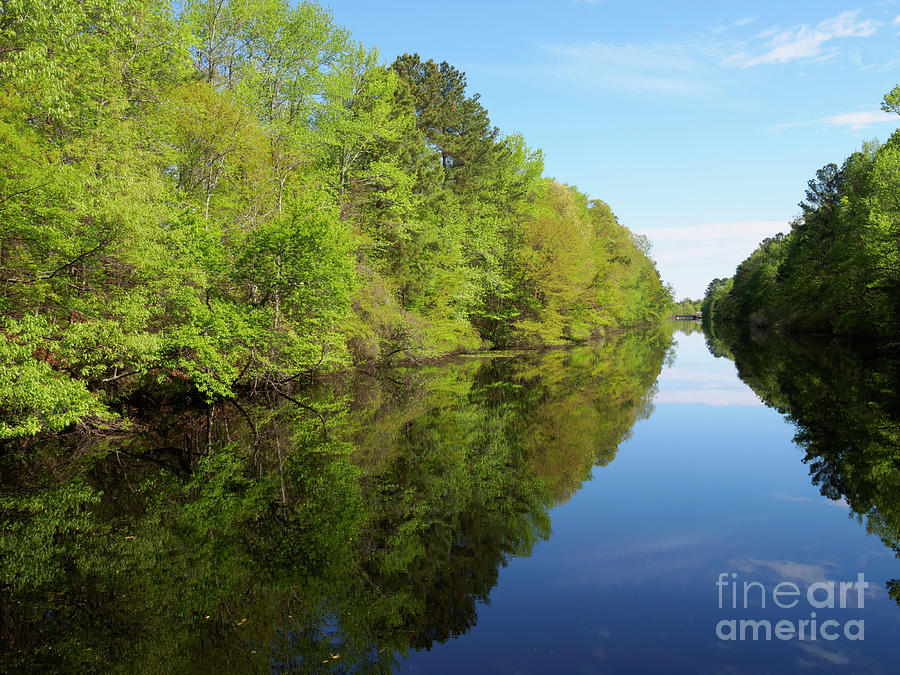 Dismal Swamp Canal Photograph - Dismal Swamp Canal In Spring by Louise Heusinkveld