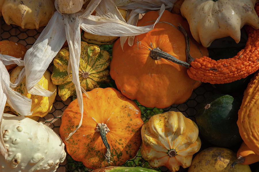 Display Of Colorful Ornamental Gourds And Pumpkins 3 by Jenny Rainbow